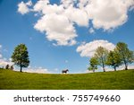 grazing horse at high land... | Shutterstock . vector #755749660