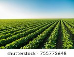 green ripening soybean field ... | Shutterstock . vector #755773648