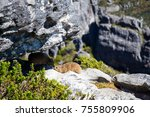 one day in table mountain | Shutterstock . vector #755809906