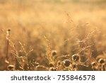 golden colors of a field in... | Shutterstock . vector #755846578