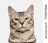 portrait of snow bengal cat ... | Shutterstock . vector #755895886