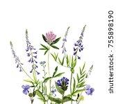 watercolor drawing wild plants... | Shutterstock . vector #755898190