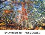 autumn forest background    Shutterstock . vector #755920063