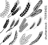 wheat ears collection   Shutterstock .eps vector #75593401