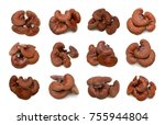 ganoderma lucidum isolated on... | Shutterstock . vector #755944804