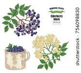 elderberry black common names... | Shutterstock .eps vector #756098830