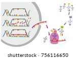 dna transcription and... | Shutterstock . vector #756116650