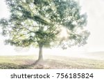 one large green tree in autumn... | Shutterstock . vector #756185824