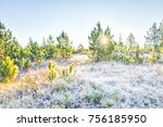 Frost Winter Landscape With...