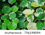 ecological concept  green and...   Shutterstock . vector #756198094