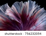 close up red and white fin tail ... | Shutterstock . vector #756232054