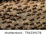 Brood of worker termite on tree ...