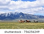 Stock photo horses running free in meadow with snow capped mountain backdrop 756256249