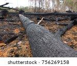 destroyed amazon rainforest by... | Shutterstock . vector #756269158