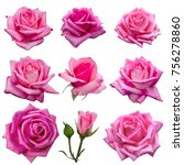 Stock photo collage of delicate pink roses isolated on white background 756278860