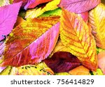 Fallen Autumn Leaves. Autumn...