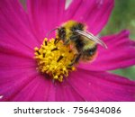 Bumblebee And Pink Flower