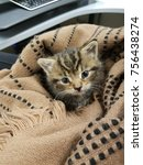 Stock photo small kitten wrapped in a blanket tiger kitten four week old kitten kitten with blue eyes small 756438274