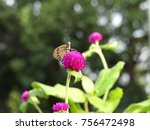 Stock photo flower and butterfly butterfly flower 756472498