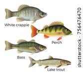 freshwater fish set   white... | Shutterstock .eps vector #756476470