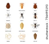 insects parasite vermin vector... | Shutterstock .eps vector #756495193