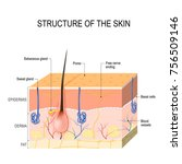 structure of the skin. skin... | Shutterstock .eps vector #756509146