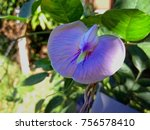 Small photo of Exposure intend on purple flower