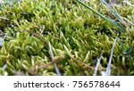 moss and small flora in spring... | Shutterstock . vector #756578644