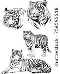 set of vector drawings on the... | Shutterstock .eps vector #756592318