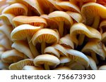 Wood Mushrooms Background....