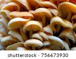wood mushrooms background....   Shutterstock . vector #756673930