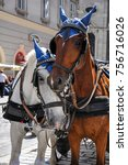 carriage horses nuzzling in... | Shutterstock . vector #756716026