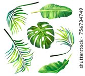 set of botanical illustrations... | Shutterstock . vector #756734749