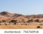 dunes with acacia trees in the... | Shutterstock . vector #756760918