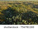 spring flowering cloudberries... | Shutterstock . vector #756781183