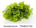 celtuce  stem lettuce korean... | Shutterstock . vector #756861733