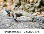 australian water dragon running ... | Shutterstock . vector #756890476