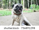 holiday with dog | Shutterstock . vector #756891298