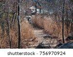 great falls maryland billy goat ... | Shutterstock . vector #756970924