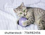 a gray striped kitten plays... | Shutterstock . vector #756982456