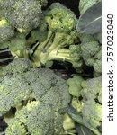 broccoli harvest. many...   Shutterstock . vector #757023040