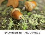 Background with autumn acorns...