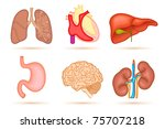 illustration of set of internal ... | Shutterstock .eps vector #75707218