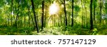 forest panorama with green... | Shutterstock . vector #757147129