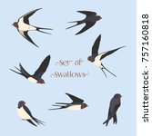 simple swallows on a light blue ... | Shutterstock .eps vector #757160818