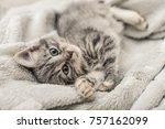 cute little grey kitten lying... | Shutterstock . vector #757162099