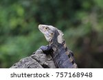 iguana on rock with green... | Shutterstock . vector #757168948