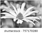 Small photo of flower