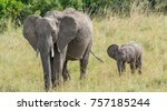 elephant and baby | Shutterstock . vector #757185244