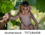 a cute monkey lives in a... | Shutterstock . vector #757186408